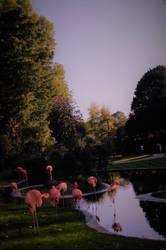 Zoo Antwerpen flamingos by flety007