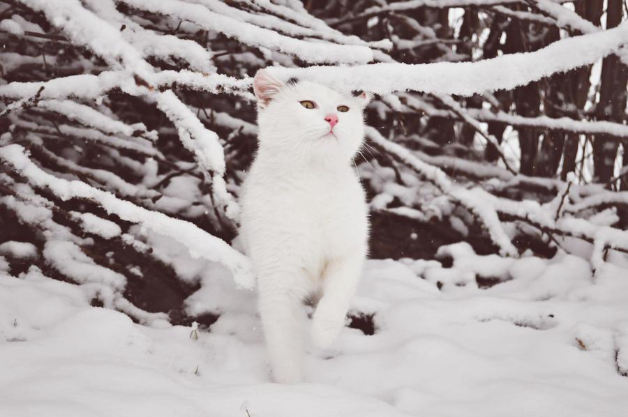 cute little snowball by Alexaaandra