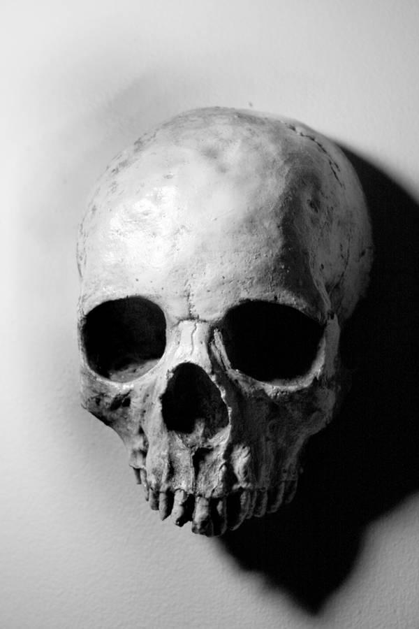 Stock: Skull 4 by TamvakisPhoto