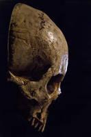Skull Stock new by TamvakisPhoto