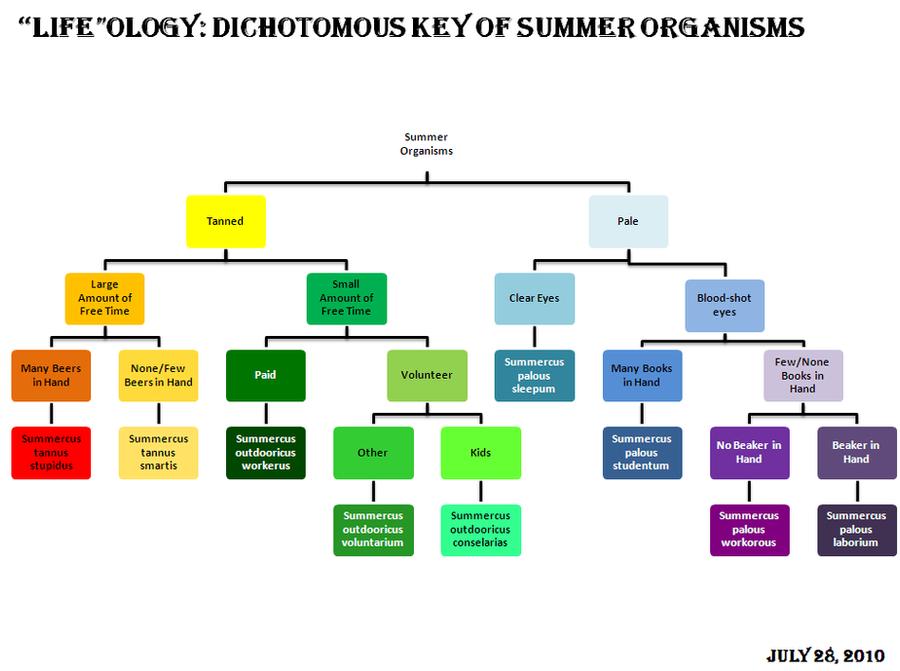 Summer dichotomous key by bltshop on deviantart summer dichotomous key by bltshop ccuart Image collections