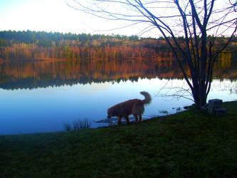 Dog at Dusk by Toby-Linn