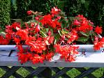 Red Splash of Colour