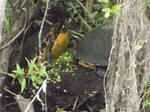 Herp- Derp Turtle