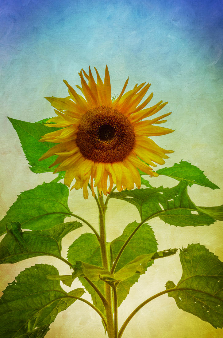 Sunflower by Padawancats
