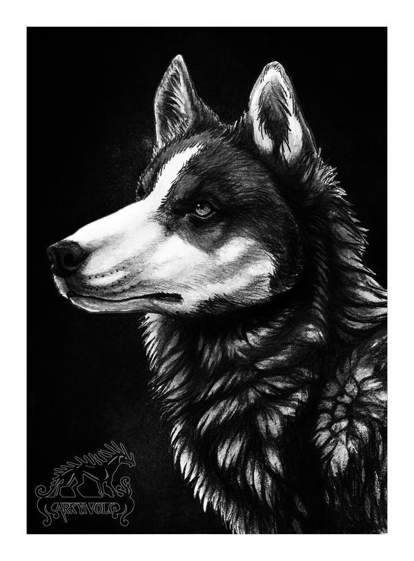 Doge by ArkyiVolg