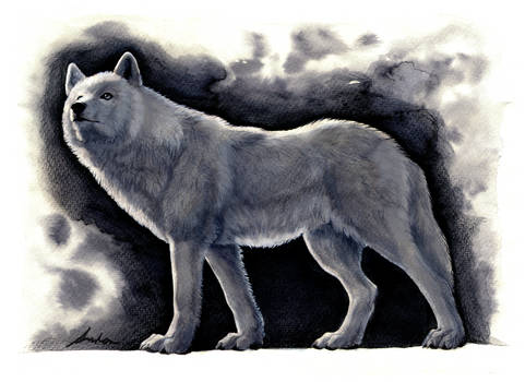 Wolf (YCH OPEN)