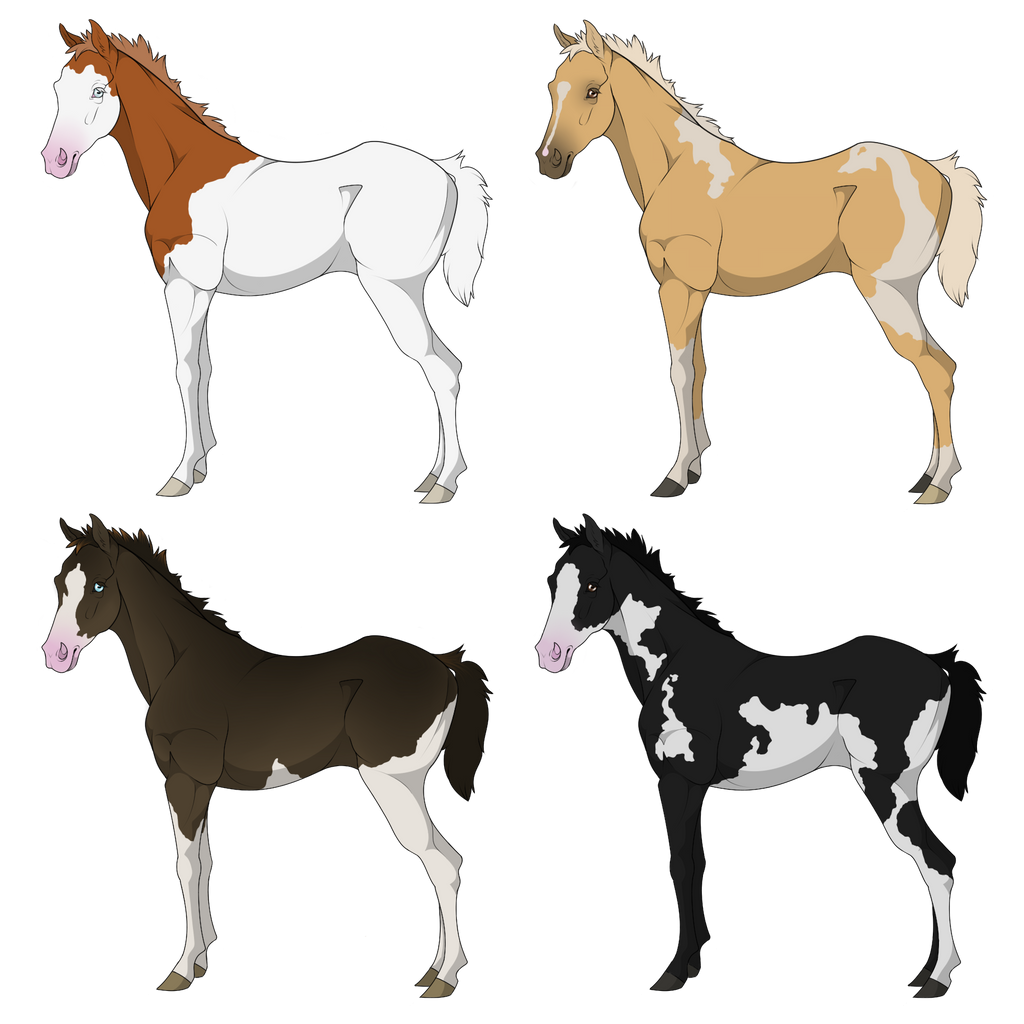 Thoroughbred Foal Sale -CLOSED-
