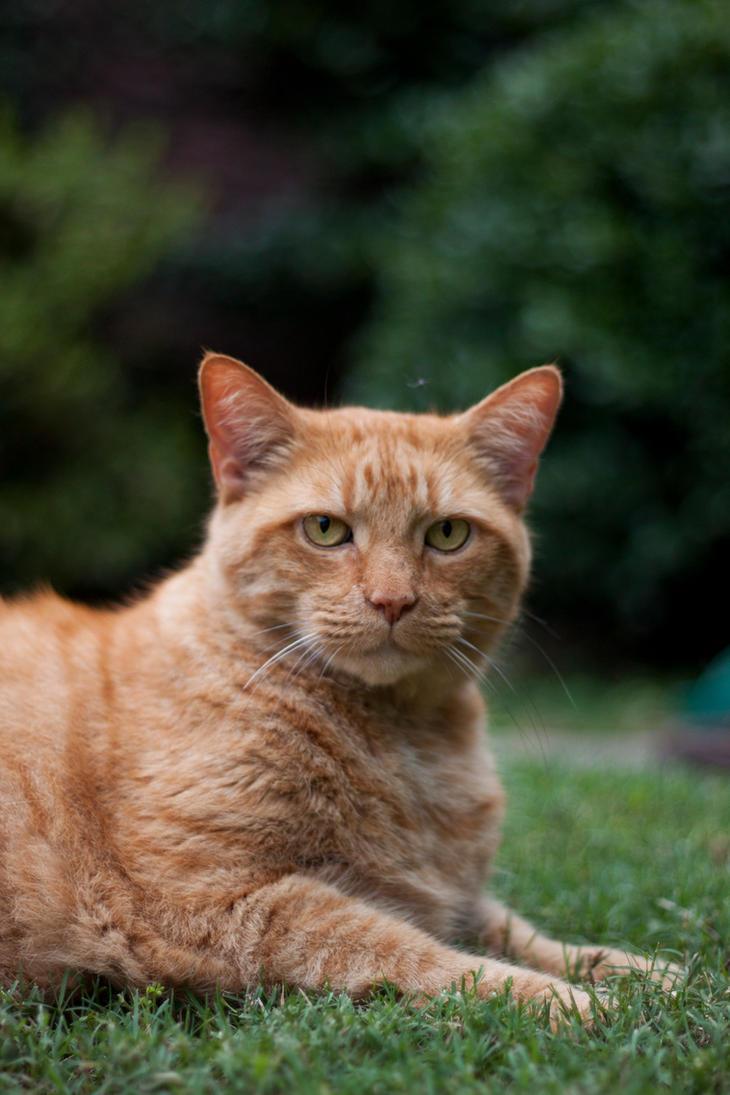 Elliot the Cat 1 by pinkroseart