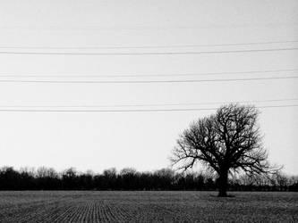 Ohhh Kansas by Jokaley