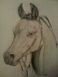 Phar Lap by gingerhanna