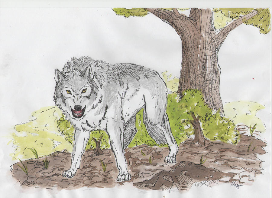 mad wolf drawings - photo #20