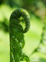 green greeny by pharaoxp