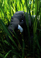 hiding in the jungle. by pharaoxp