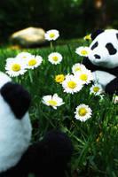 Lovin pandas. by pharaoxp