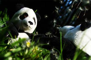 PandaLove by pharaoxp