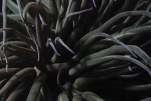 anemon - underwater