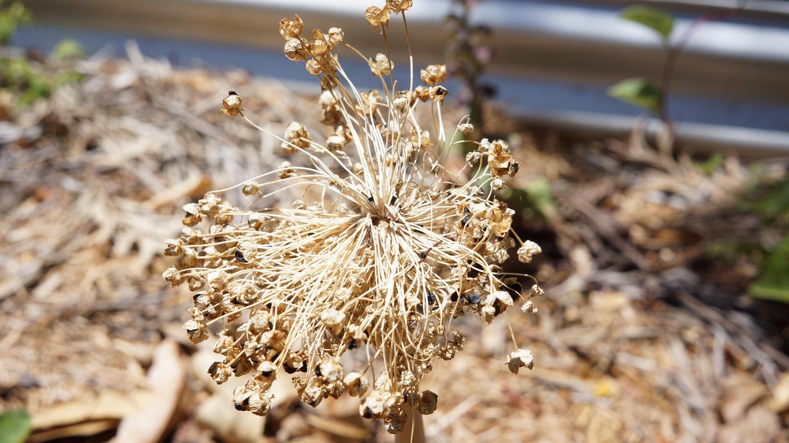 Dead Flower/Thing by manuelo-pro