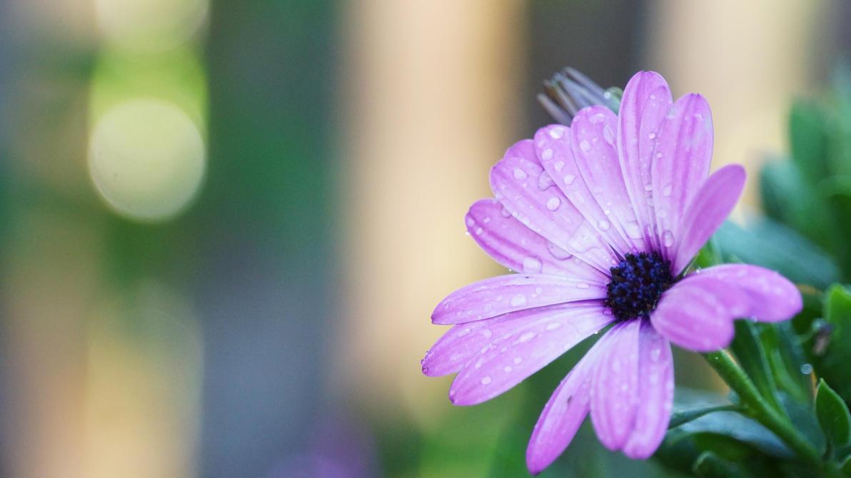 Purple Flower by manuelo-pro