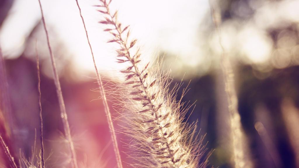 Plant in sunlight by manuelo-pro