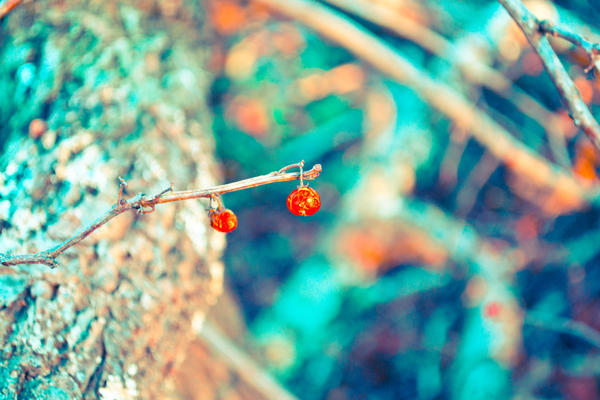 Winter berry by Spademm