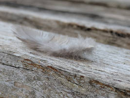 The feather on wood by Naturevulpex