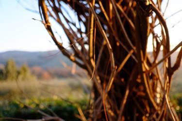 Umbrian winter sun