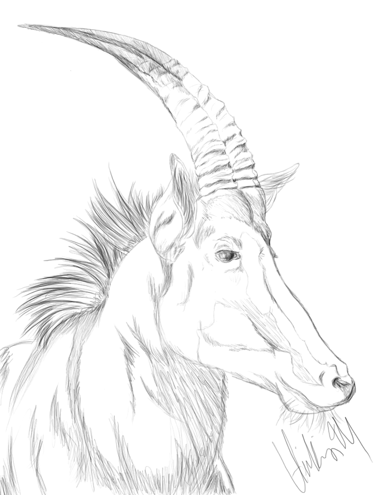 Sable antelope by HilleriX on deviantART