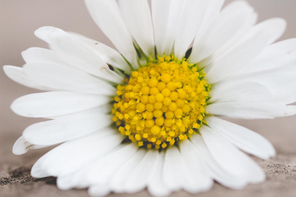 The smallest Daisy by Fotogrl-Concordia