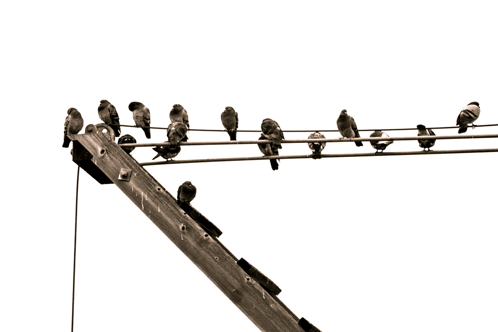 Birds on a Wire by Fotogrl-Concordia