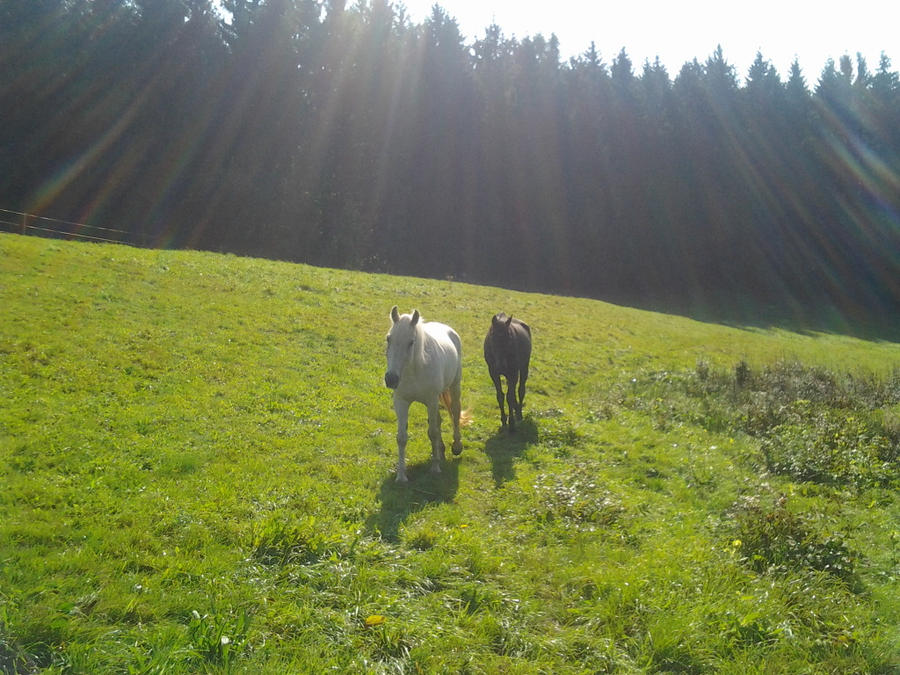 My horses Rico and Susi by Fritzi009