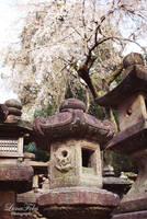 Nara 10 by LunaFeles