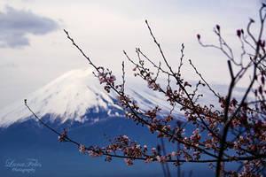 Mt. Fuji 6 by LunaFeles