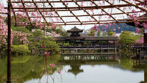 Garden of the Heian-Shrine 03 by LunaFeles