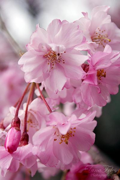 spring... by LunaFeles