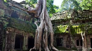 Ta Prohm Temple by LunaFeles