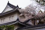 Kyoto by LunaFeles