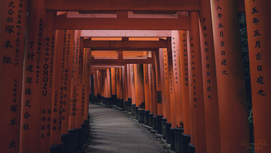 The Torii of Fushimi Inari