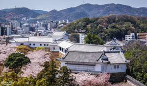 Himeji and Sakura