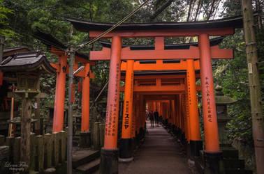 Torii of Fushimi Inari