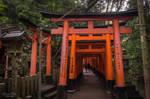 Torii of Fushimi Inari by LunaFeles