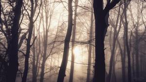 morning mist by LunaFeles