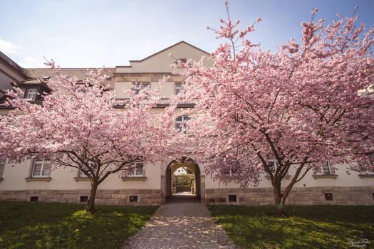 Springtime in Chemnitz