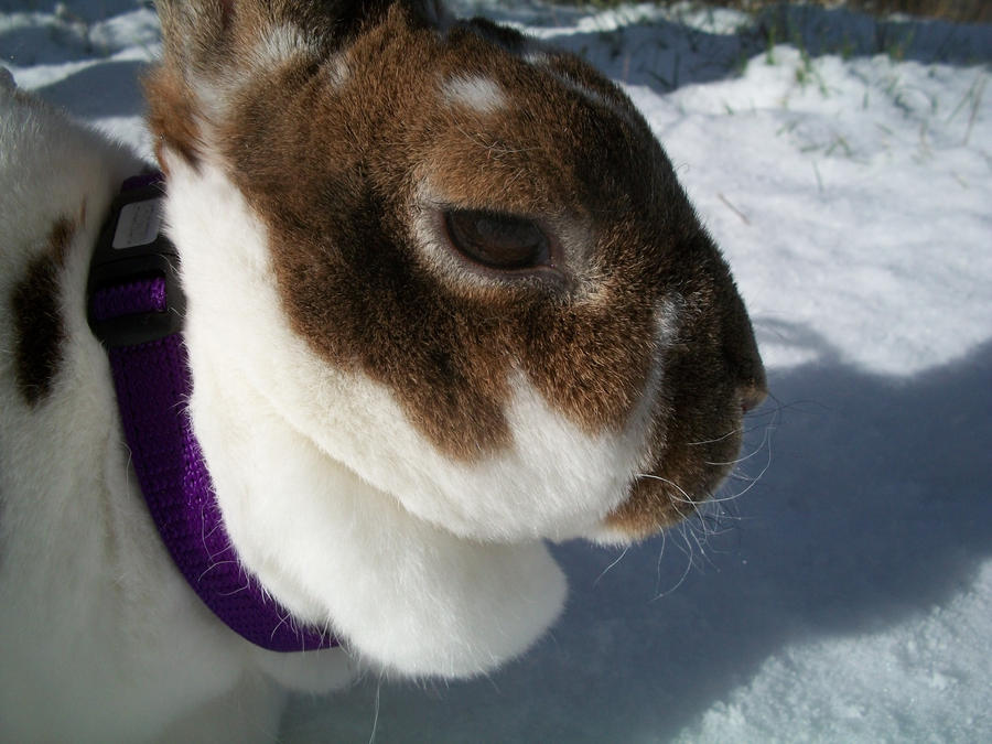 Sunny Snow Bunny by AnimalPlant12