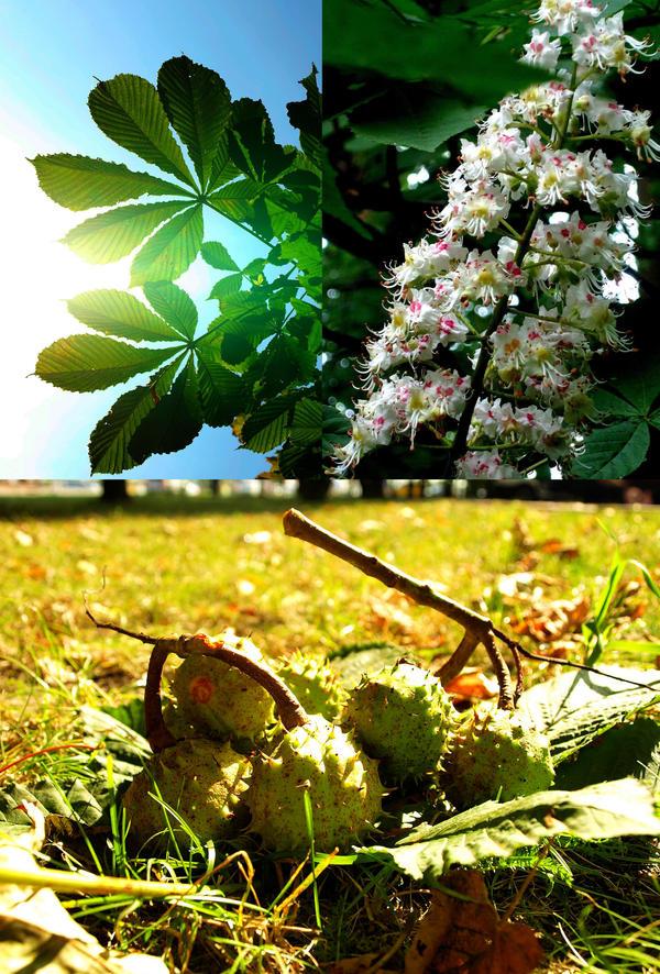 chestnut by HeretyczkaA