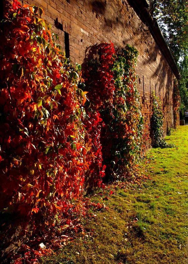 autumn colours by HeretyczkaA