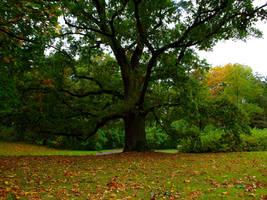 tree by HeretyczkaA