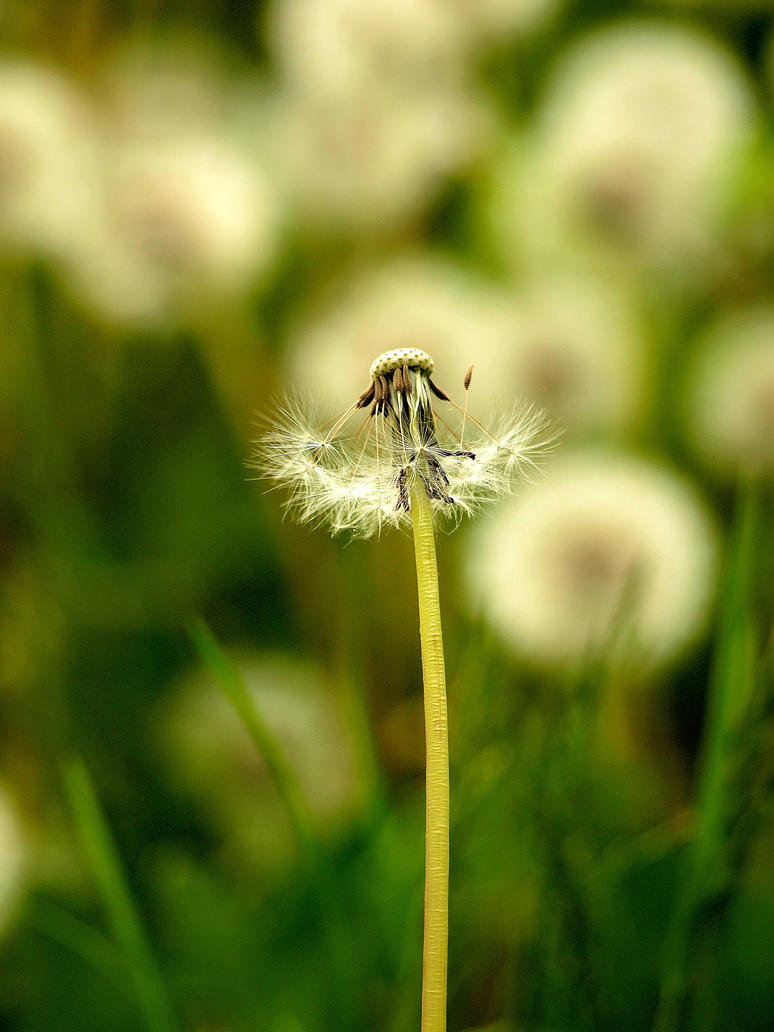 wind kiss by HeretyczkaA