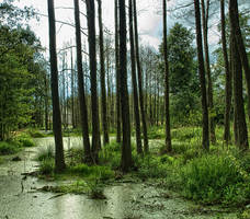 swamp by HeretyczkaA