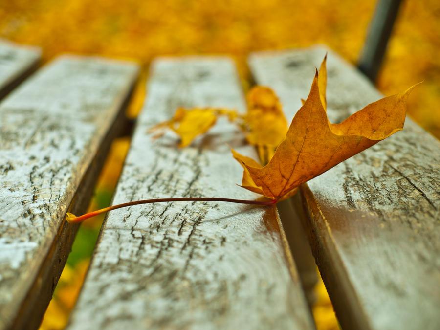 leaf by HeretyczkaA
